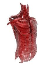 3d illustration of human torso muscles