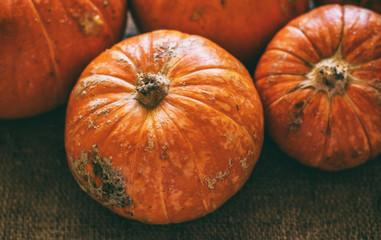Autumn harvest. Pumpkins on a canvas background. Selective focus. Vintage close up photo.