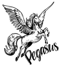 Sketch of Pegasus. Hand drawn illustration converted to vector