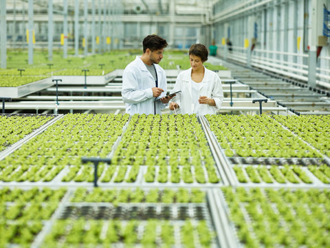 Scientificcoworkers in modern agricultural glasshouse