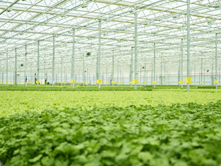 View of lush green cultivation in plant