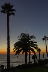 Silhouette of Palm Trees at Dusk, Central Coast, California