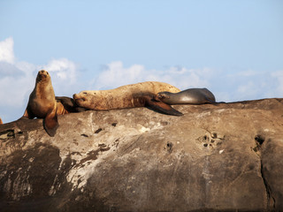 Relaxing in the sunshine.