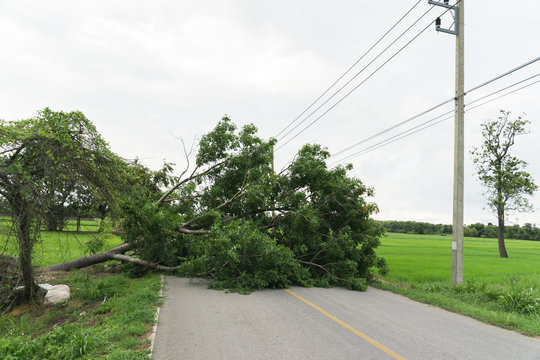 Large tree fallen and block the road