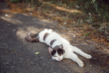 Cat lying play on the ground and grass,Happy face of cute cat, Cat lying play