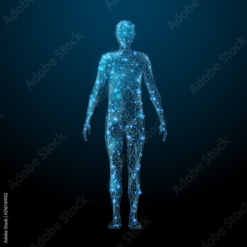 Human body low poly wireframe  Vector polygonal image in the form of