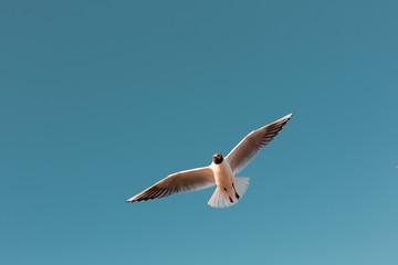 Gulls in sky