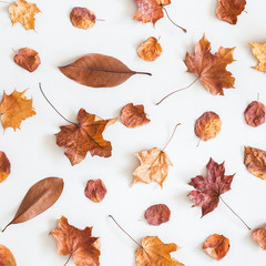 Autumn composition. Pattern made of dried autumn leaves on white background. Autumn, fall concept. Flat lay, top view, square