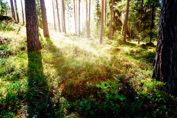 Summer landscape - in the forest on a Sunny day