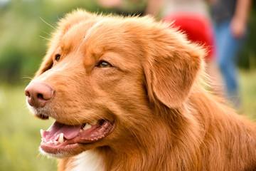 Beautiful dog. Portreit.