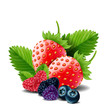 Sweet berries mix isolated on white background. Ripe raspberries, Strawberries and blueberries. vector illustration.