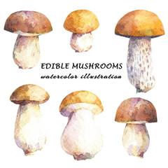 Set of edible mushrooms - birch bolete and porcini. Watercolor hand drawn illustration.