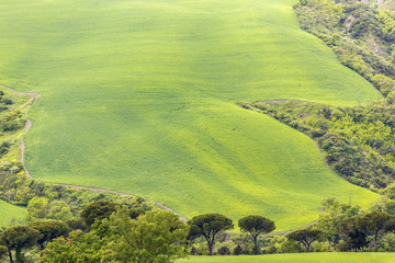 Sloping fields in a valley with trees in the countryside