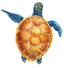Watercolor turtle illustration