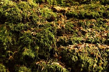 Green moss close up selective focus