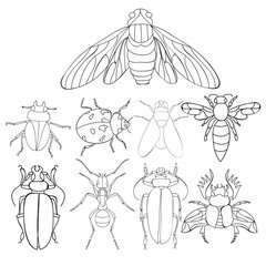 set of insects, beetles, book coloring page