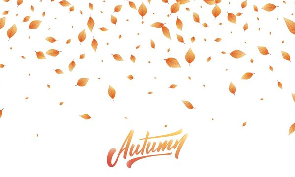 Autumn leaves background. Fall leaves frame, overlay, banner design
