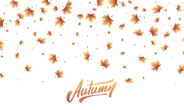 Leaves background. Fall Autumn maple leaves frame, overlay, banner design
