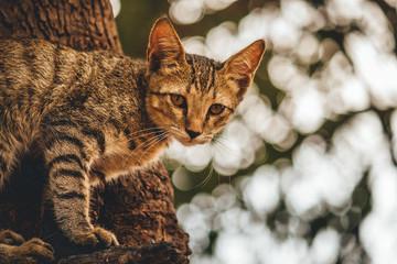 Cute tiny kitten