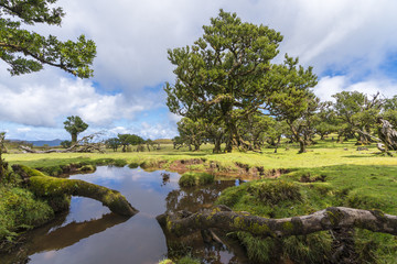 Laurel trees and pool in the UNESCO Site Laurisilva Forest. Fanal, Porto Moniz municipality, Madeira region, Portugal.