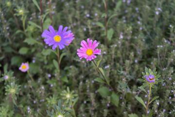 Blumen im Bauerngarten