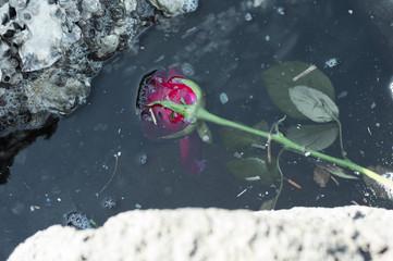 捨てられた花