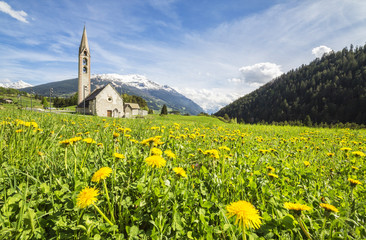Yellow flowers and green meadows frame the church of Premadio Bormio Stelvio National Park Valtellina Lombardy Italy