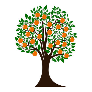 Green tree silhouette. Christmas tree with orange fruits. Isolated on white background. Vector