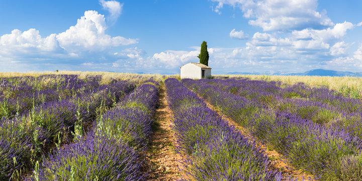 Valensole, Provence, France.