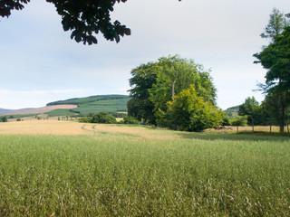 Crop field in Glen Clova