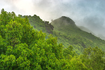 green trees on mountain with rainy and fog in morning