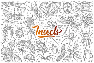 Hand drawn insects ant and butterfly.