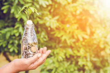 Saving concept, hands save holding golden coin stack and small green tree on nature background.