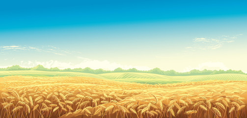 Rural landscape with wheat fields and background. Vector illustration.
