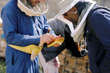 Beekeeper shows a honeycomb he took from a hive to a Reuters cameraman in Hamdan