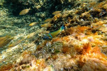 Small fish in sea