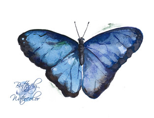 Large blue watercolor butterfly. Illustration with exotic bright butterfly