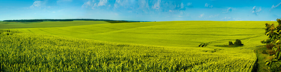 Wall Mural - panorama spring green field