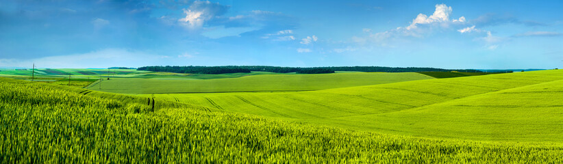 Wall Mural - Panoramic view of beautiful yellow-green field hils with blue sky