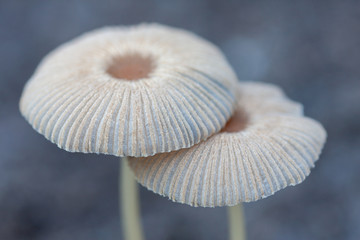 Nice small mushrooms in the forest at autumn