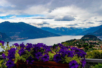 View on Italien Lake with flowers in foreground