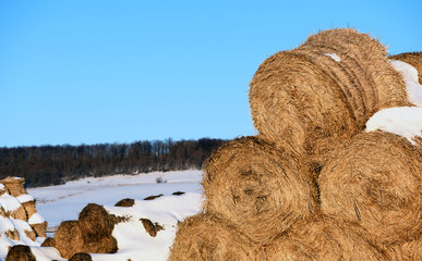 Round Straw Fodder Bedding Bales in Winter