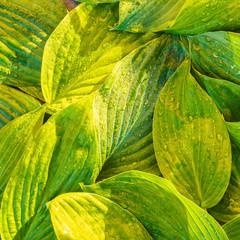 Fresh garden leaves bell organic gardening background