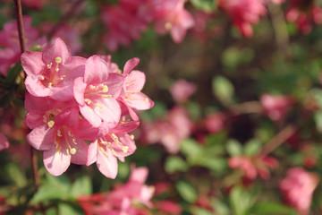 wild pink flower