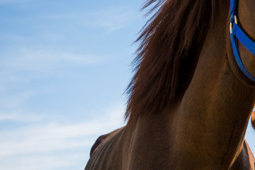 Brown horse neck, body part.