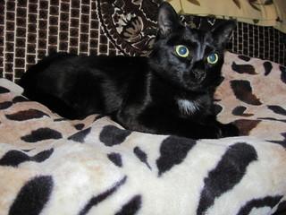 black cat on a rug