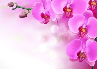 Pink purple orchids flowers closeup on purple gradient with bokeh background. Vector illustration of realistic violet orchids flowers in branch isolated.
