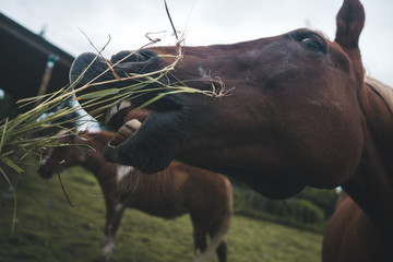 Horse Eating 1