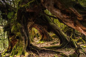 corridor of trunks #1