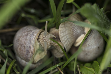 two snails protrude from their shells